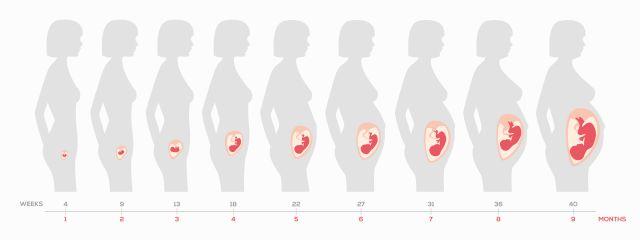Ημερολόγιο Εγκυμοσύνης: 4η Εβδομάδα