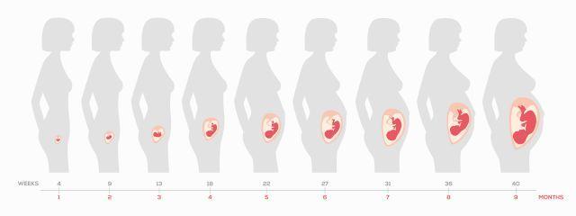 Ημερολόγιο Εγκυμοσύνης: 1η Εβδομάδα