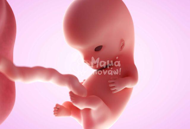 Ημερολόγιο Εγκυμοσύνης: 13η Εβδομάδα